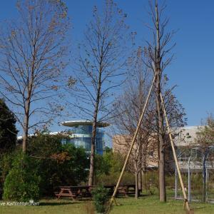 台風被害の木、その後