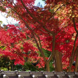 成田山公園/紅葉まつり