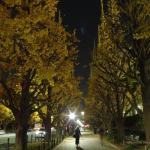 神宮外苑いちょう並木の夜景