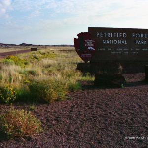 アリゾナ州の空から / 化石の森