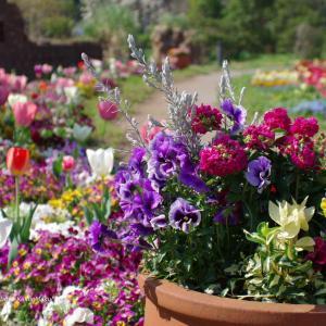 春の色とりどり