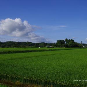 日本の田園風景