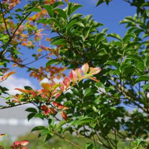 ほのかな色の木々