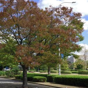 秋めいた色の木々