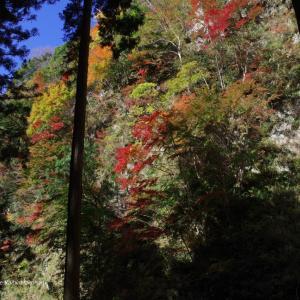 木々のパレット