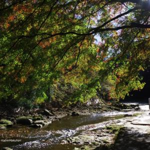 紅葉間近の養老渓谷