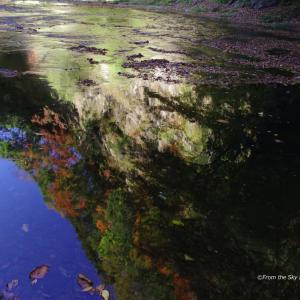 川面の秋色
