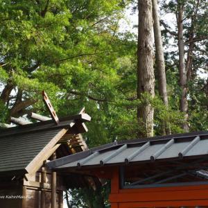 玉前神社で初詣&お祓い
