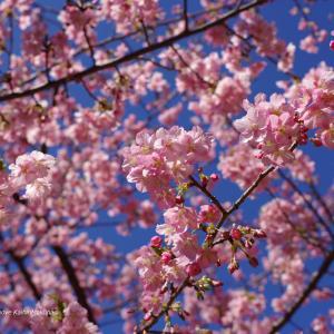 春爛漫の2月