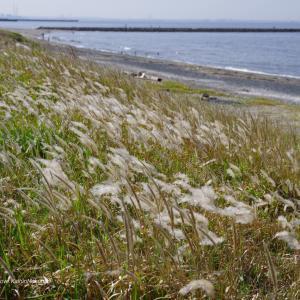 風そよぐ幕張の浜
