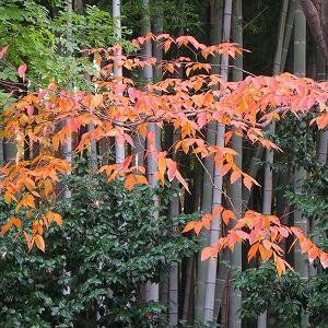 もっと秋が深まったら紅葉の帯♪