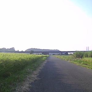 相模川夕暮れライド
