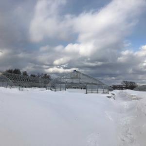雪 雪 雪 落雪防止か回避?