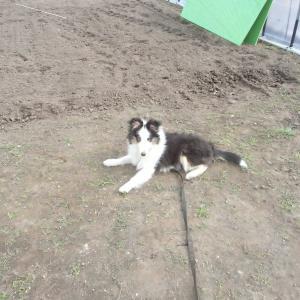 苗床作りと新しい家族♪