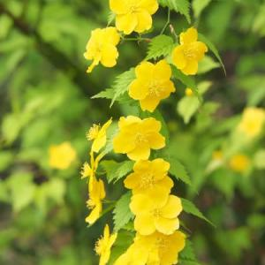 元気な黄色で明るくいこう!