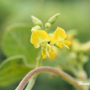 小さな黄色のお花だね