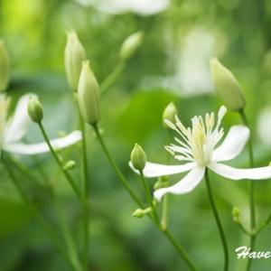仙人のお花