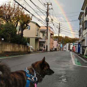 雨のち虹、そしてフワフワ