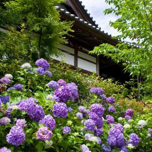 資福寺の紫陽花と暑さ対策(^^♪