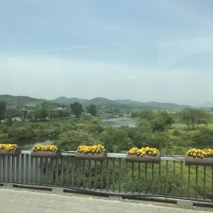 2019年春韓国大邱旅行二日目(3)。전주(全州)行き高速バスに乗る。週末の全州は宿に困る