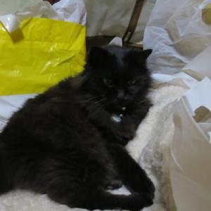 汚部屋が好きな猫