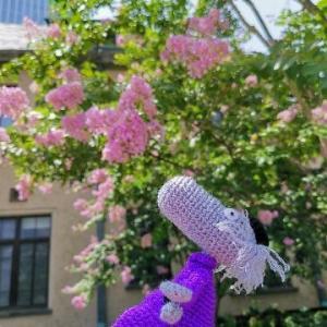 夏の花~残暑お見舞い申し上げます(^-^)(^-^)
