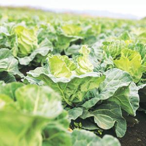 野菜嫌いな子でも美味しく食べられる 大地を守る会 お試しセットで旬を味わう