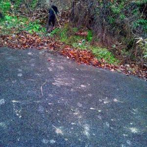 猟犬の散歩