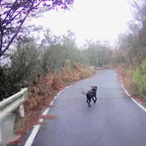 猟犬リリーちゃんの散歩