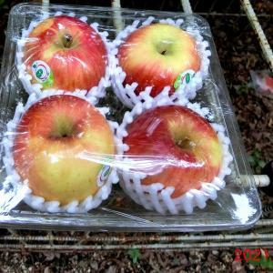 箱ワナのエサに、リンゴは如何?