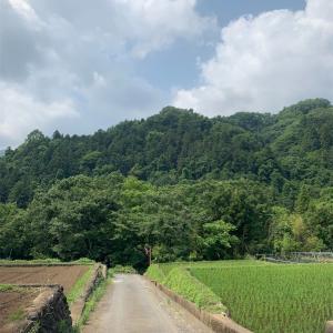 #2019-7 【桂川】下流域 巌地区で群れ鮎釣り
