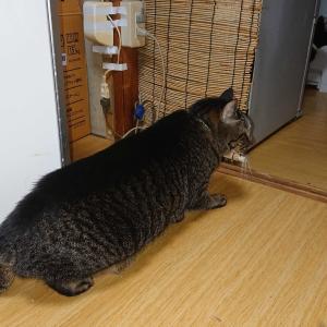 雷🌩️にビビる 猫🐈️