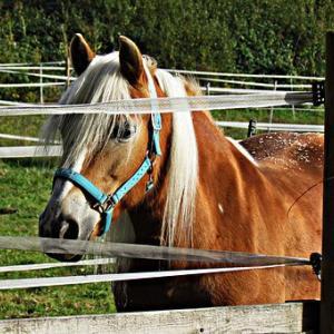 【秋華賞2019予想】秋華賞2019の狙い目の馬はどの馬か?レースの本質を探ってみる!