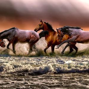 【天皇賞秋2019予想】天皇賞秋2019の狙い目の馬はどの馬か?レースの本質を探ってみる!