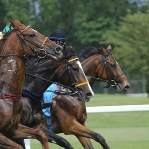 【競馬予想】フェブラリーステークス2020の狙い目の馬はどの馬か?レースの本質を探ってみる!