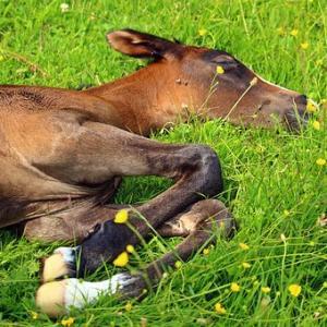 【競馬予想】NHKマイルカップ2019の狙い目の馬はどの馬か?レースの本質を探ってみる!