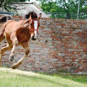【競馬予想】ヴィクトリアマイル2019の狙い目の馬はどの馬か?レースの本質を探ってみる!