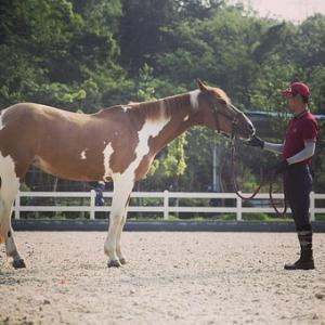 【日本ダービー2020予想】日本ダービーの狙い目の馬はどの馬か?レースの本質を探ってみる!