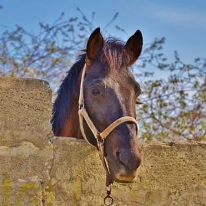 【安田記念2020予想】安田記念の狙い目の馬はどの馬か?レースの本質を探ってみる!