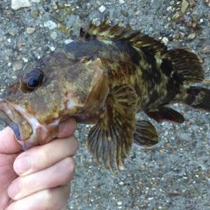 デカイ魚を狙って釣るコツ