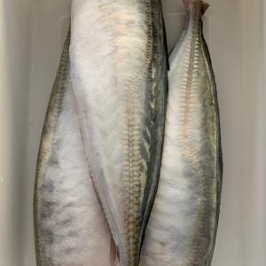 魚生活 〜 その1 〜
