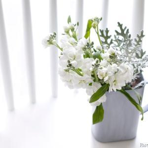 【ダイソー】シルバーグリーンで引き立てる、冬の花飾り!
