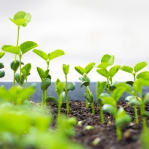 野菜作り超初心者でも手ぶらで家族で農業!「シェア畑」は完全サポート