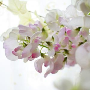 いつものように、そこの花があるだけで