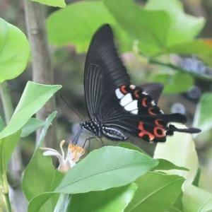 蝶たちの庭