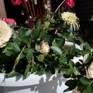 花花交換で寄せ植え
