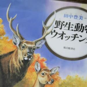 動物画家、田中豊美さん