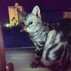 驚愕!!「恐い間取り」に登場した滋賀県某ホテルの写真に写りこんだモノ