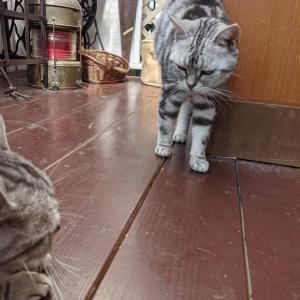 娘猫はお父様がお嫌い