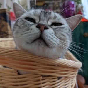 娘猫ミルさんの魅力と幸福の条件